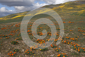 Wild Flowers And Hills Stock Photo - Image: 24692020
