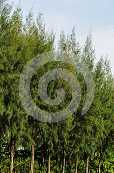 Trees And Sky Royalty Free Stock Images - Image: 24700829