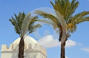 Moroccan Palms Stock Image - Image: 24704861