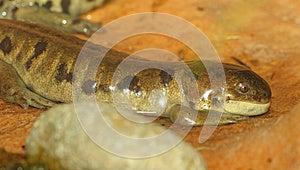 Salamander Stock Photos - Image: 24721203
