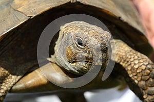 Tortoise Royalty Free Stock Images - Image: 24744159