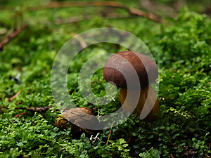 Mushroom Royalty Free Stock Photos - Image: 24744538