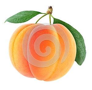 Apricots Stock Image - Image: 24753551