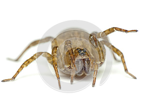 Spider  On White Stock Images - Image: 24778734