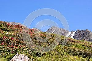 Rocks, Flowers And Blue Sky Stock Photos - Image: 24789033