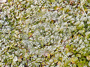 Frosty Leaves Royalty Free Stock Image - Image: 24794636