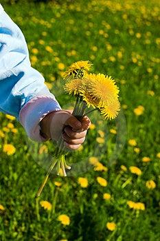 Bouquet Over Dandelions Field Stock Images