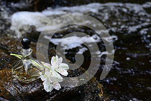 A Bootle Of Oil Royalty Free Stock Photography - Image: 24803677