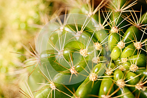 Vivid Green Grusonii Cactus Closeup Shot Stock Image - Image: 24816491