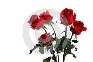 Group Of Rose On White Royalty Free Stock Image - Image: 24825566