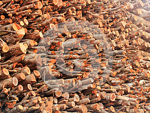 Deforestation- Logs Of Chopped Wood Piled For Sale Stock Image - Image: 24836881