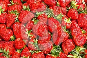 Fresh Organic Strawberries Stock Image - Image: 24837151