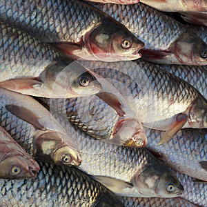 A Pile Of Fishes Stock Image - Image: 24848391