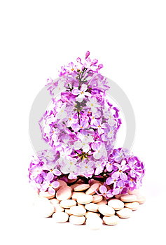 Lilacs Or Syrigna Grows From The Tablets And Drugs Stock Images - Image: 24854144