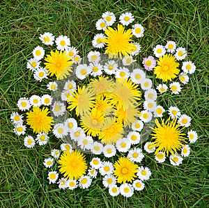 Spring Flowers Composition Royalty Free Stock Photography - Image: 24876187