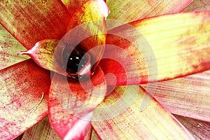 Bromelaid De Hawaiin Foto de archivo - Imagen: 24882000