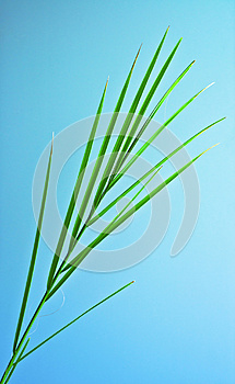 Palm Leaf Royalty Free Stock Images - Image: 24882239