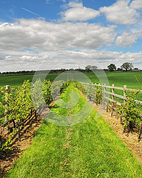 Fenced Footpath Between Fields Stock Photo - Image: 24885350