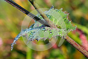 Leaf With Dew Stock Photos - Image: 24890363