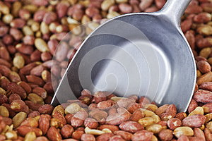 Peanuts Stock Photo - Image: 24893740