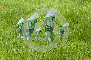 100 Euro Notes Blooming In The Grass Stock Image - Image: 24899251