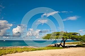 Divi-Divi Tree Of Aruba. Sky. Ocean. Tropics. Royalty Free Stock Images - Image: 24903129