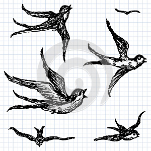 Swallows Royalty Free Stock Photography - Image: 24904647
