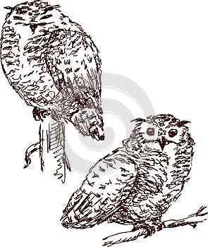 Two Owls Royalty Free Stock Images - Image: 24904709