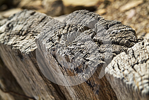 Wooden Texture Stock Photography - Image: 24919662