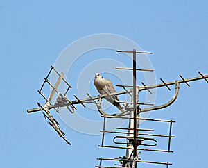 Bird On A Wire Royalty Free Stock Photos - Image: 24920058