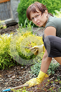 Middle Age Woman Gardening In Sunny Day Royalty Free Stock Image - Image: 24924416