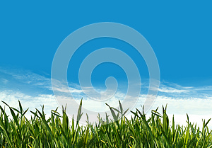 Spring Green Grass Field Royalty Free Stock Photography - Image: 24924427