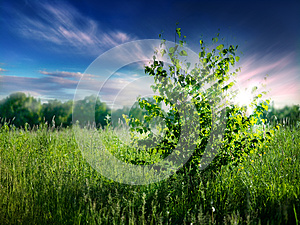 Summer Natural Backgrounds Royalty Free Stock Photography - Image: 24941877