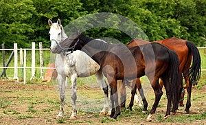 Horses Stock Image - Image: 24983361