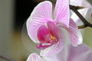 Orchid3 Stock Images