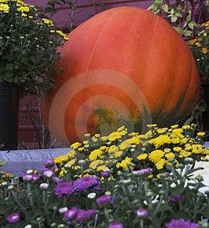 Pumpkin Free Stock Photos