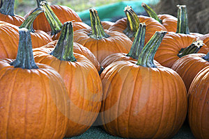 Small Pumpkins Free Stock Images