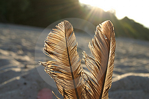 Feathers Against The Sun Free Stock Image