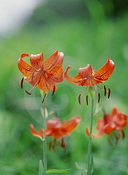Wild Flowers Free Stock Photos