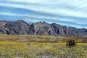 Desert In Bloom Free Stock Photo