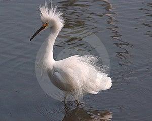 Cocky Bird Free Stock Image