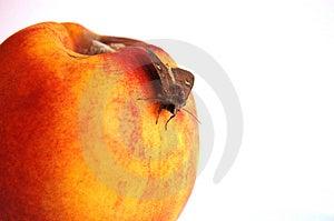 Moth On Nectarine Free Stock Images