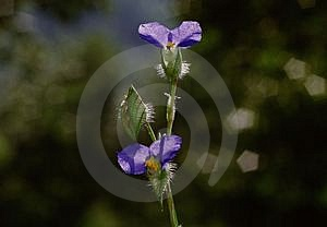 Wild Flowers Free Stock Photo