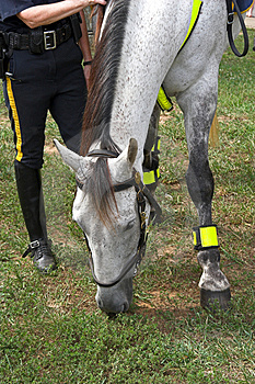 Police Woman & Horse Free Stock Photos