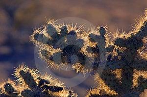 Cactus Free Stock Photography