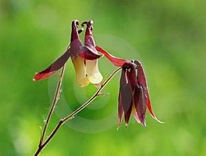 Wild Flowers Free Stock Photography