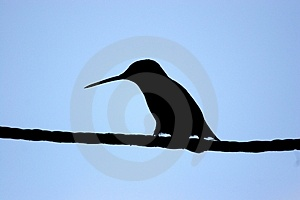 Hummer Silhouette Stock Photography