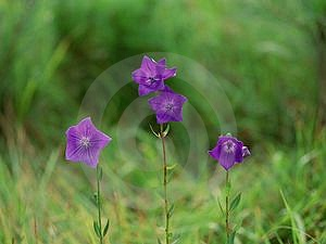Wild Flowers Free Stock Images