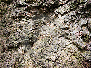 Rough Bark 2 Stock Photos
