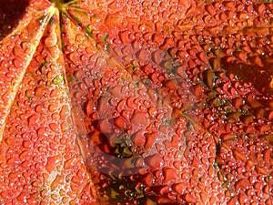 Wet Leaf Free Stock Images